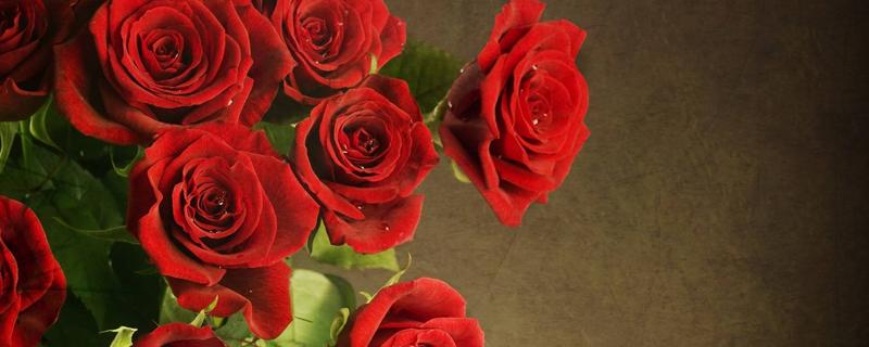 玫瑰花一年开几次花期