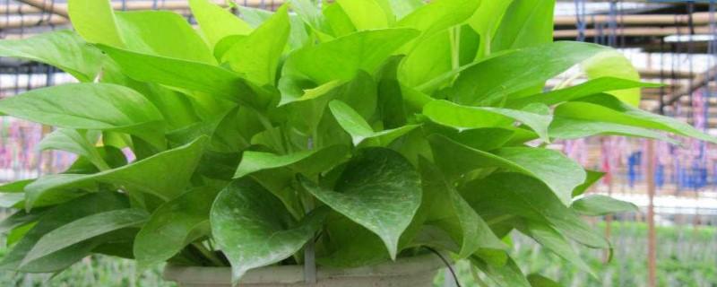 合适放在室内的植物,合适放在家里的植物