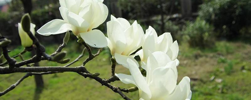 初春的花有哪些