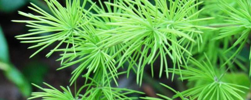 武竹的养殖方法