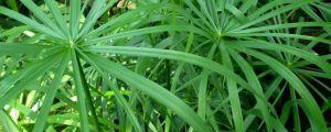 养水竹用多少水