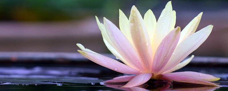 荷花什么时候开花,荷花是什么颜色