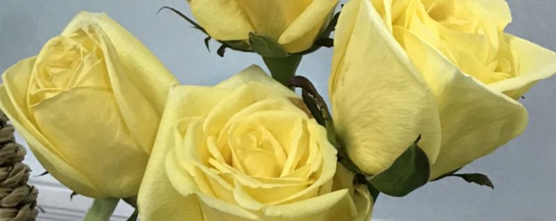 黄玫瑰代表什么,黄玫瑰图片