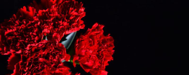 红色的康乃馨代表什么意思