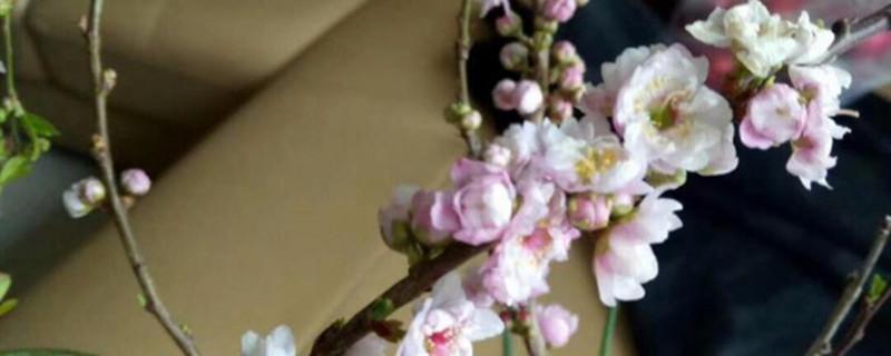 梅花压条一般在几月份,梅花的高压繁殖方法