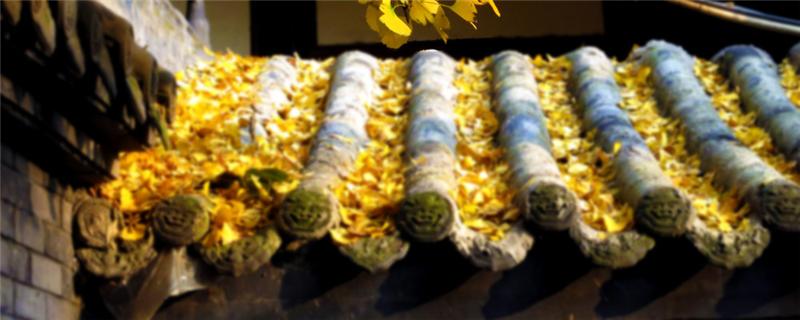 银杏施肥时间和方法,冬季银杏树用什么肥料
