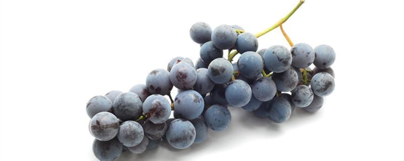 盆栽葡萄树怎么养,盆栽葡萄的养殖
