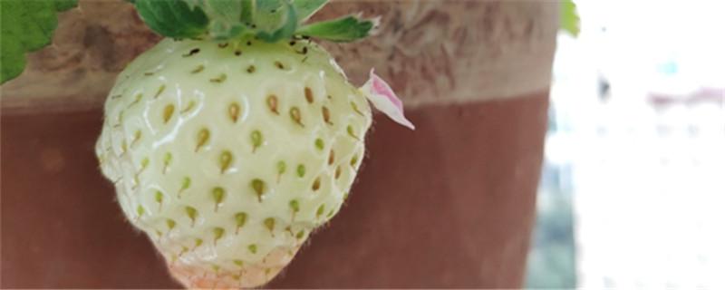 草莓的功效与营养价值
