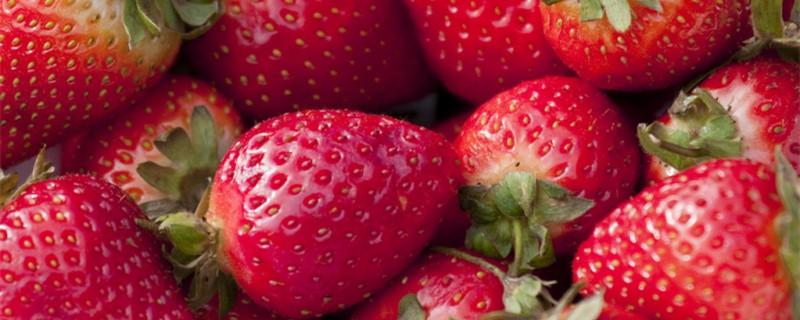 草莓是什么,怎么栽培