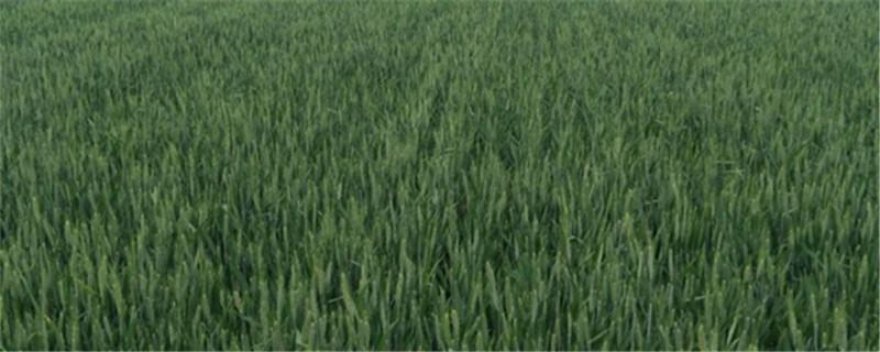 五谷是哪五谷,五谷米饭怎么做