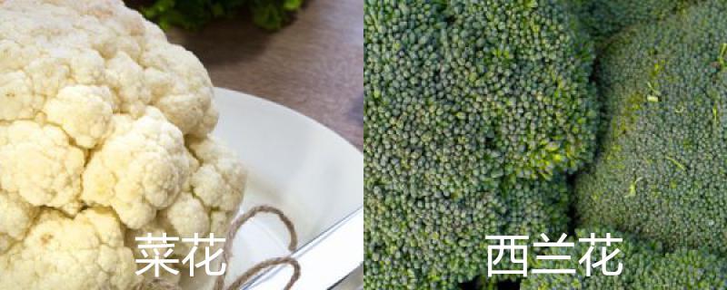 菜花和西兰花有什么区别,两者是一种东西吗