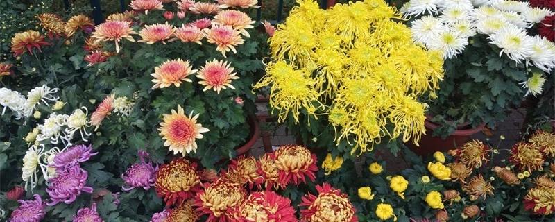 南通适合养什么花,市花和市树是什么