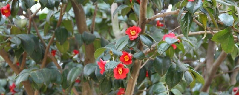 淮安适合养什么花,市花和市树是什么