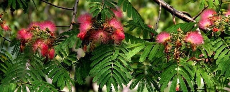 威海适合养什么花,市花和市树是什么