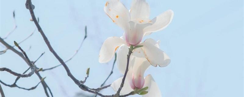 玉林适合养什么花,市花和市树是什么