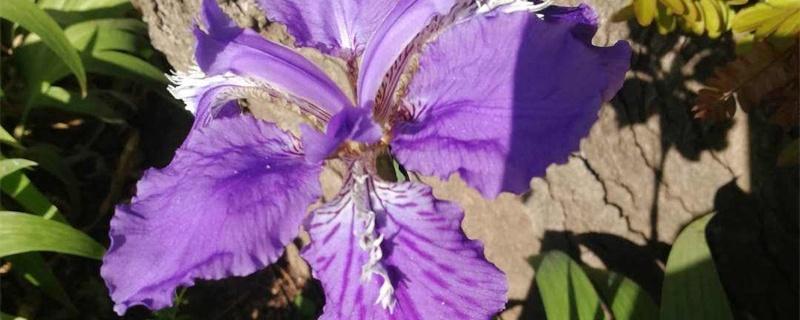 天水适合养什么花,市花和市树是什么