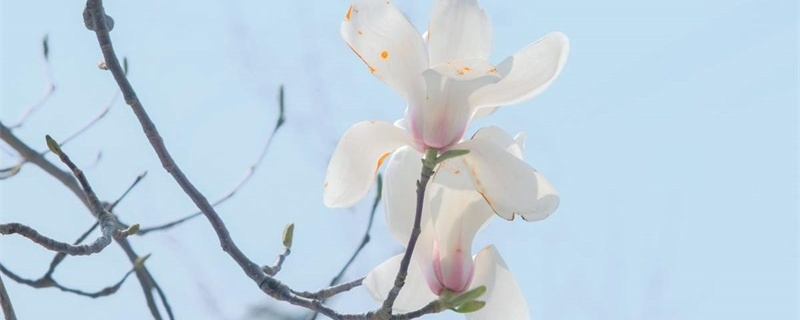 温州适合养什么花,市花和市树是什么