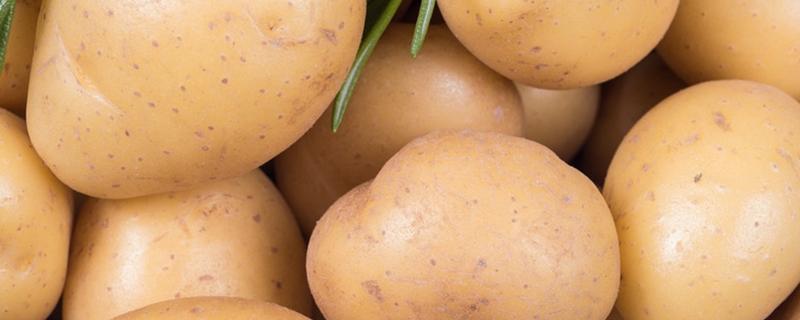 土豆什么时候种最合适