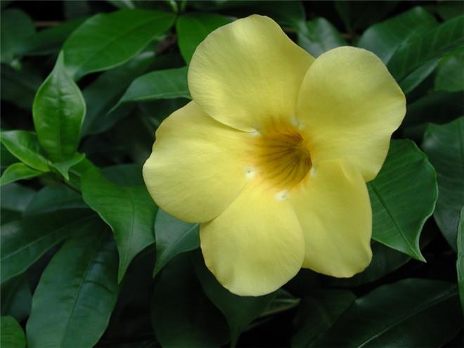 美美的黄蝉
