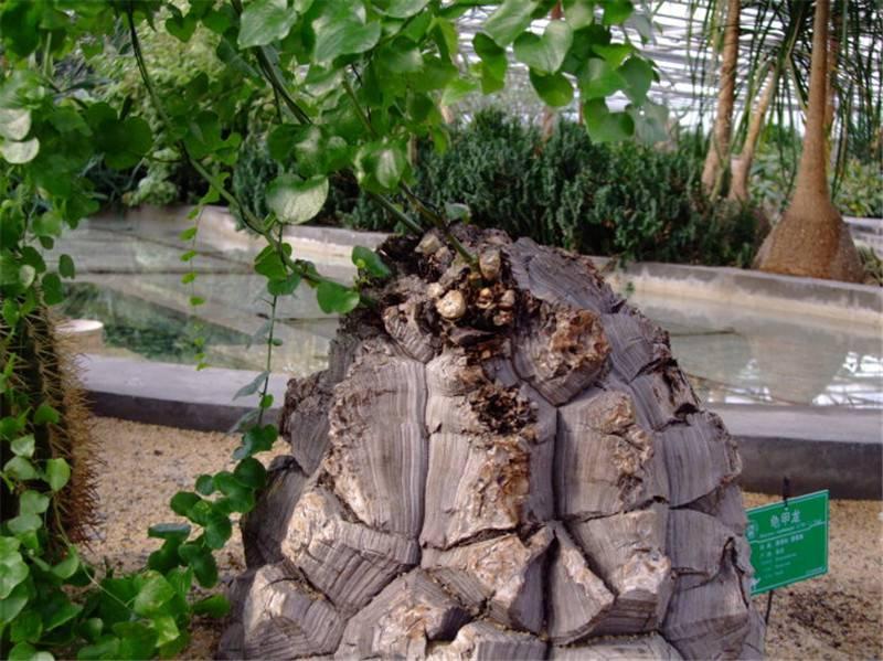 龟甲龙的清新组合