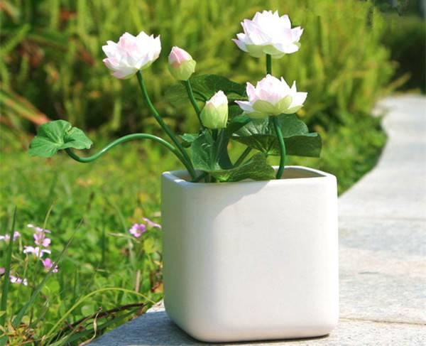碗莲盆景的图片