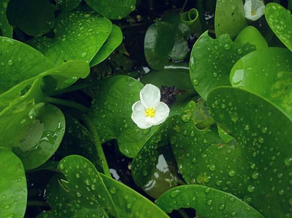 水鳖——诡异的名字