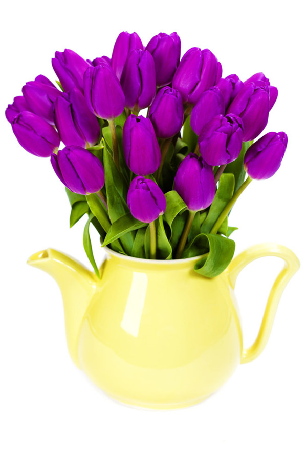 别致的紫色郁金香