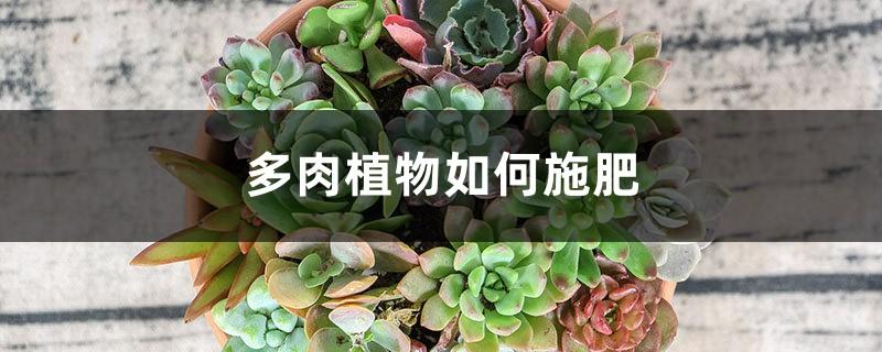 多肉植物如何施肥