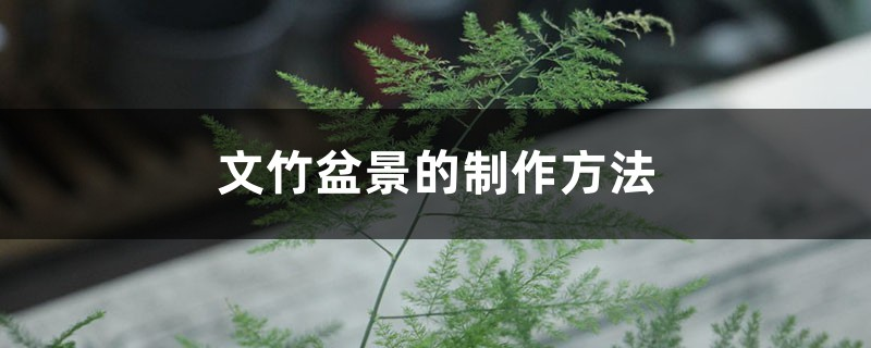 文竹盆景的制作方法