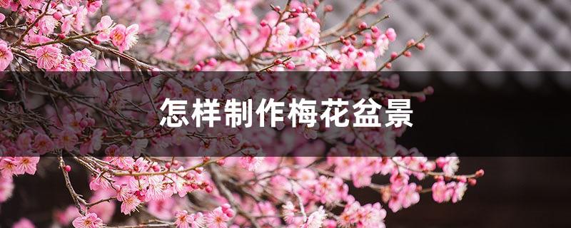 怎样制作梅花盆景