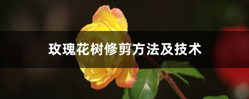 玫瑰花树修剪方法及技术
