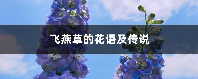 飞燕草的花语及传说
