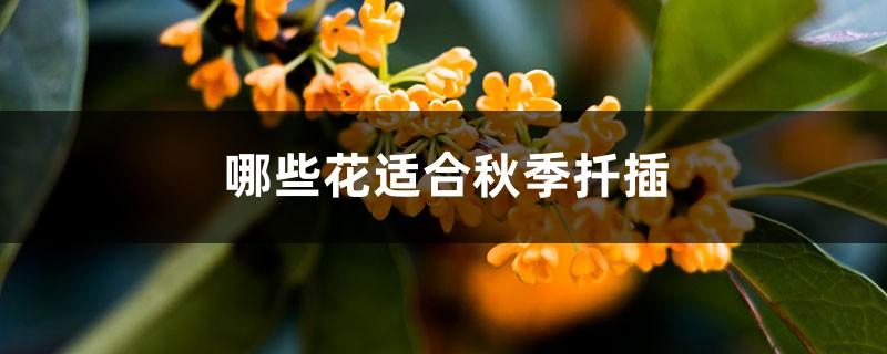 哪些花适合秋季扦插