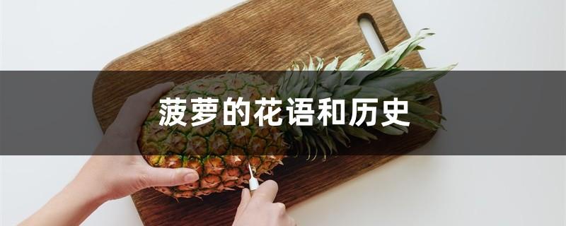 菠萝的花语和历史