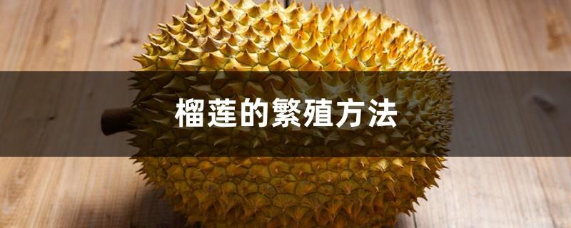 榴莲的繁殖方法