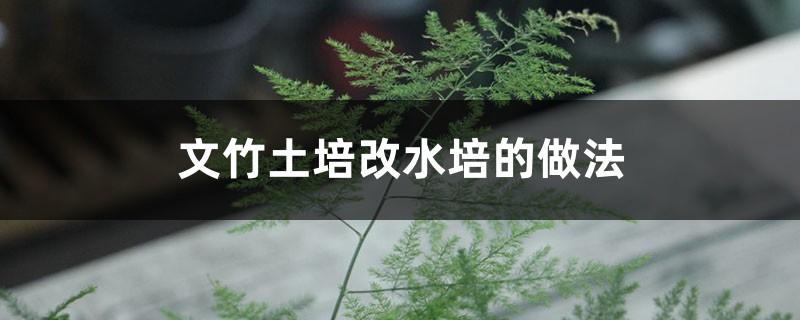 文竹土培改水培的做法
