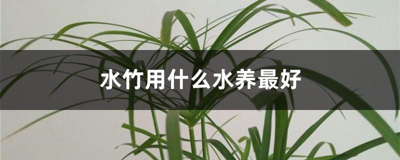 水竹用什么水养最好