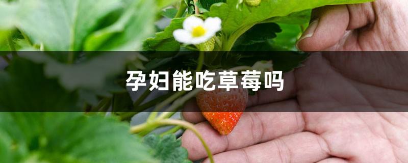 草莓吃多了会怎么样,孕妇能吃草莓吗