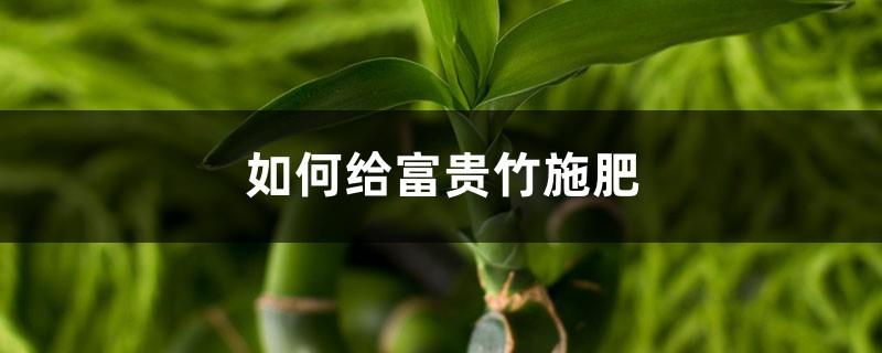 富贵竹施肥方法,用什么肥好